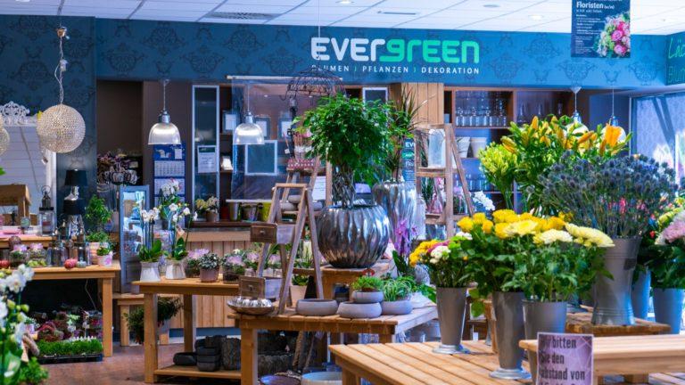 Evergreen Famila Brake